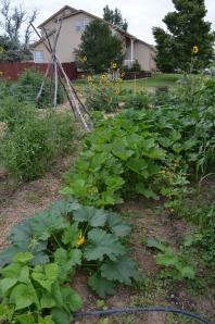 2013 Birch  Community Garden